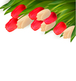 Holiday background with colorful flowers vector image vector image