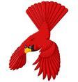 flying cardinal bird vector image