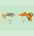 exotic tropical guppy fish colors underwater ocean vector image