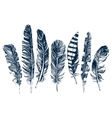 Hand drawn feathers on white background vector image