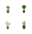 isometric flower set of tree houseplant flower vector image