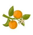 Orange branch isolated vector image