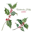 Christmas holly flower vector image