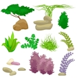 Different kinds of algae and pebbles set isolated vector image