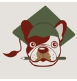 French bulldog face vector image