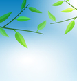Branch Tree with Green Leaves vector image