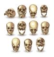 skull set on white background vector image