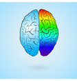 Colored left brain and right brain vector image