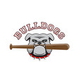 logo bulldog with a baseball bat in the teeth vector image