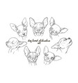 dog breed chihuahua set vector image