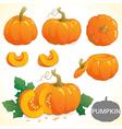 Set of pumpkin in various styles vector image