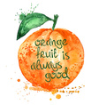 Watercolor of isolated orange fruit vector image