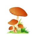 Edible mushroom porcini with grass on white vector image