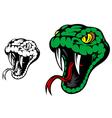 Head of danger aggressive snake vector image