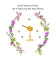 Honey plant set vector image