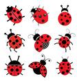 Ladybugs vector image