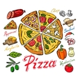 color pizza vector image