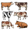 farm cows dairy cattle in cartoon style vector image vector image