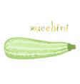 Zucchini vector image vector image