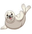 Seal with white skin greeting vector image vector image