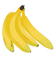 A Bunch of Lady FInger Bananas vector image vector image