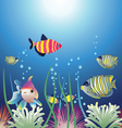 aquarium and colorful fishes vector image