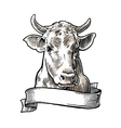 Cows head Hand drawn in a graphic style Vintage vector image