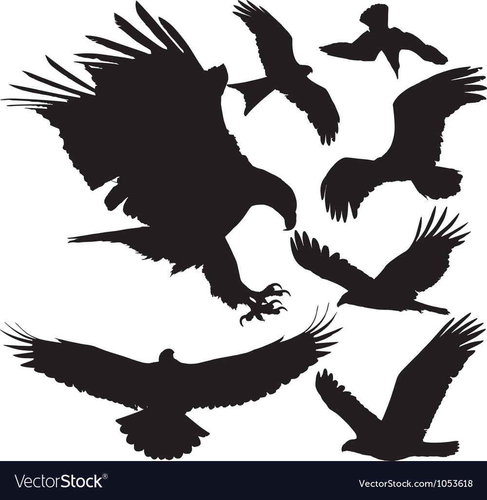 Birds of prey silhouettes vector