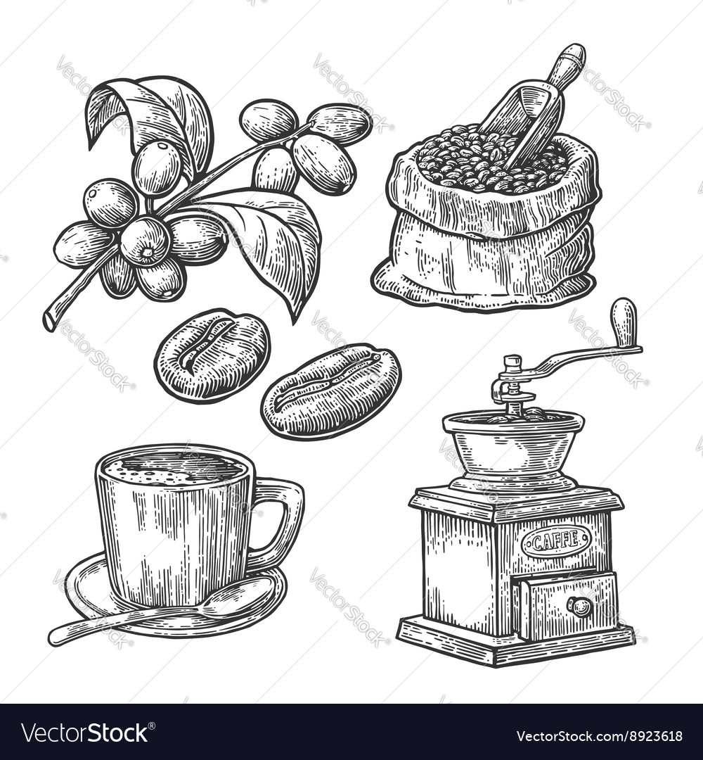 Sack with coffee beans wooden scoop beans cup vector