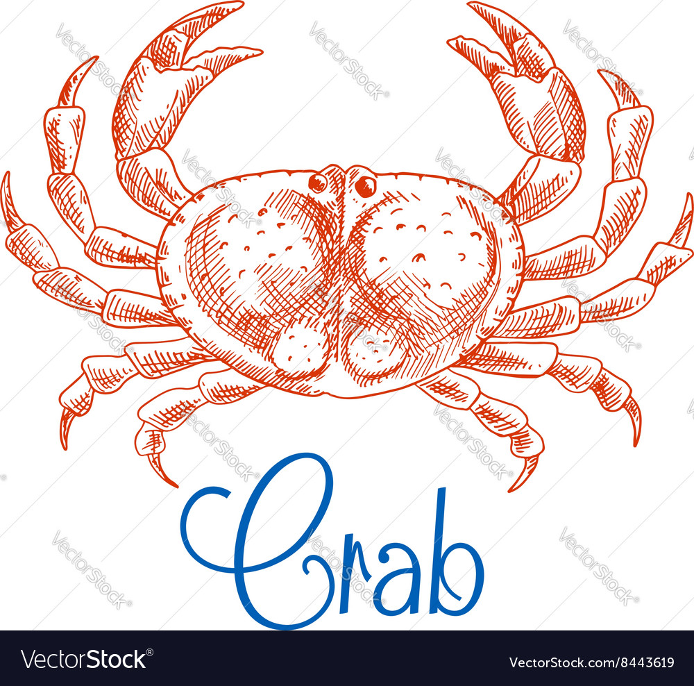 Red ocean crab with big pincers sketch icon vector