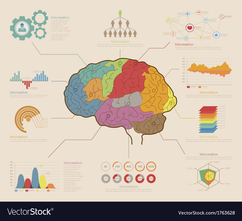 Infographic elements brain concept vector