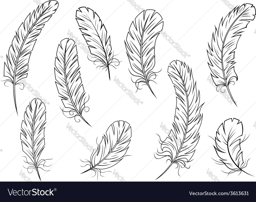 Outline bird feather icons vector