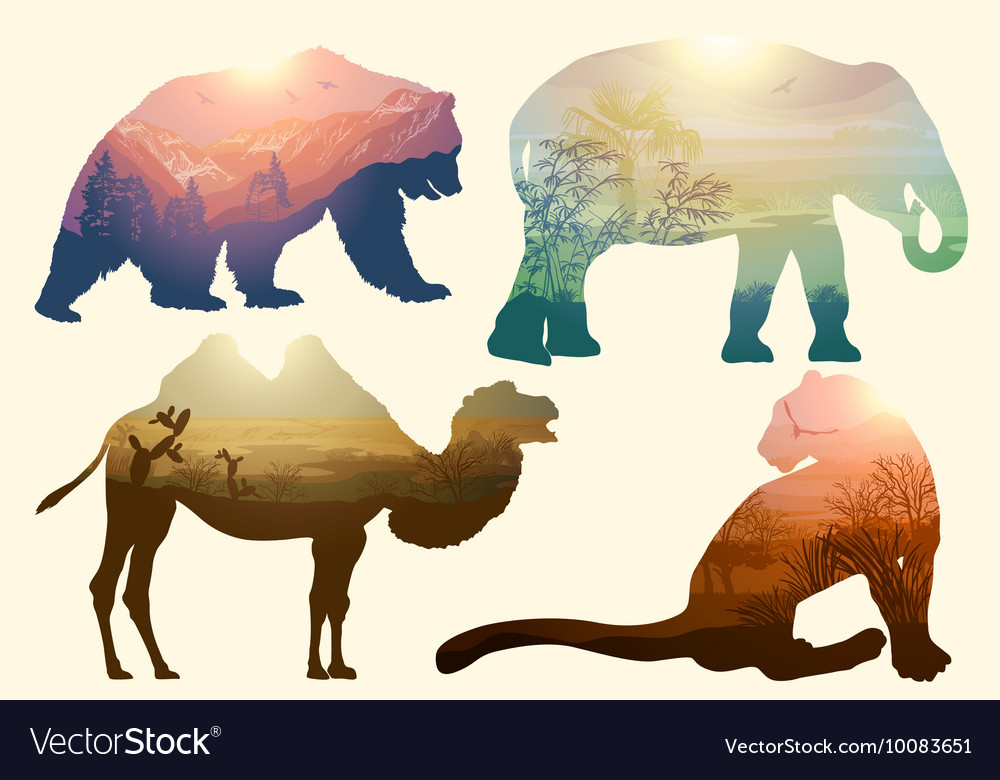 Bear elephant camel and leopard for your design wi vector