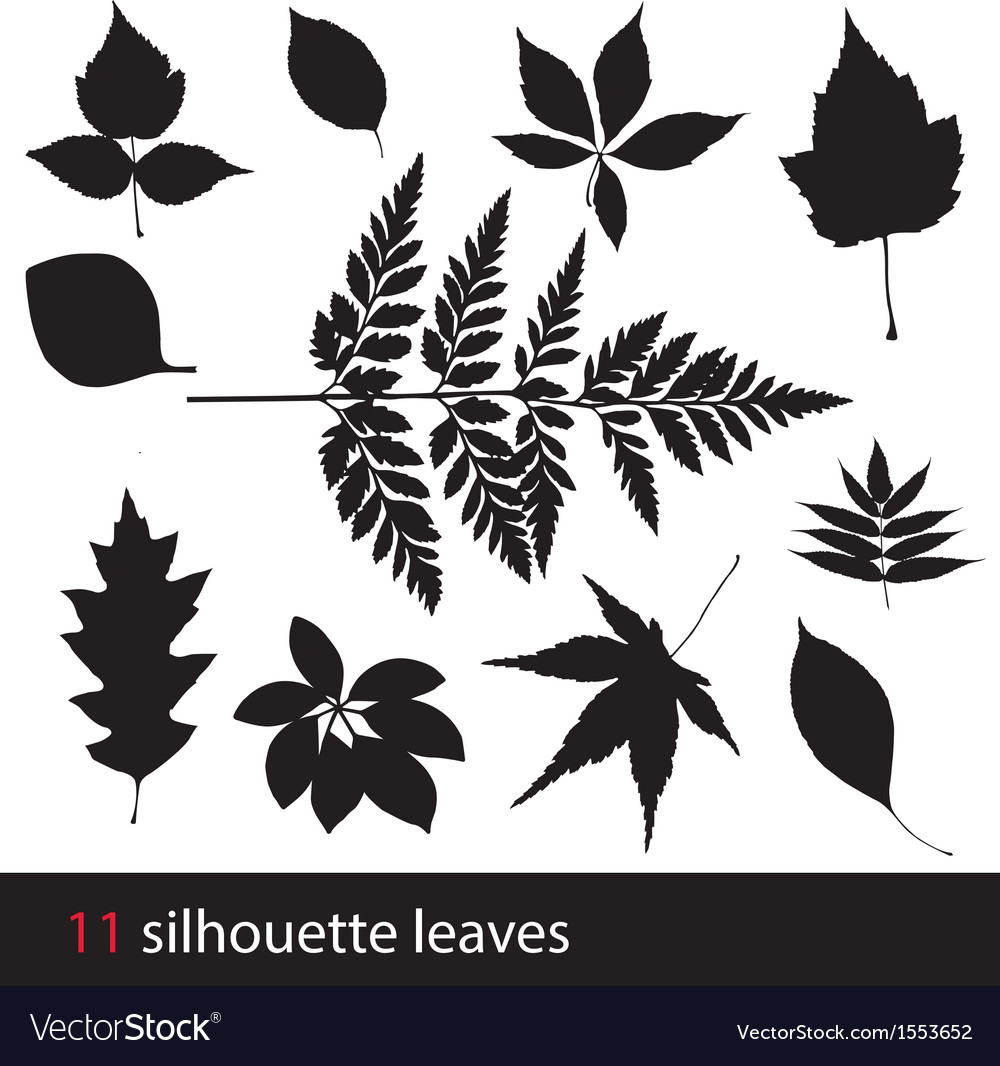 Silhouette leaves vector