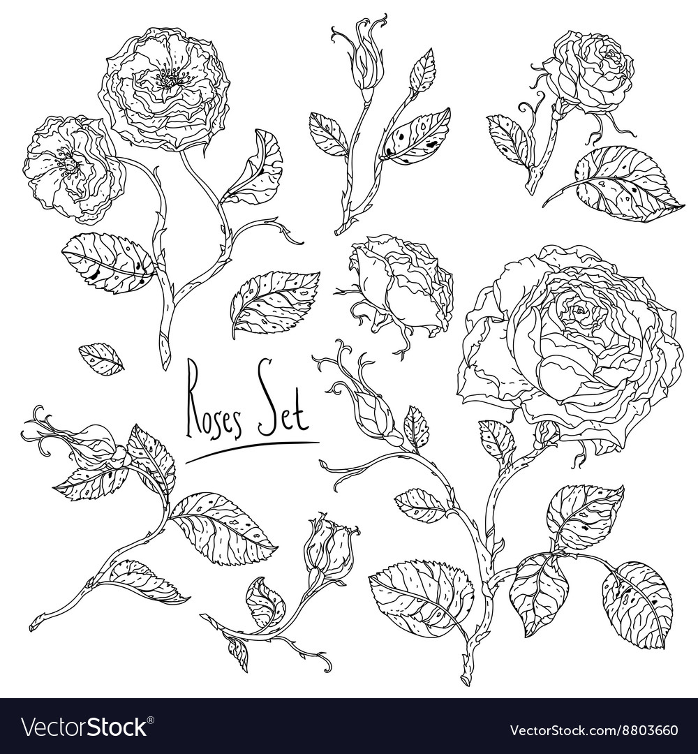 Hand drawn wild roses set vector