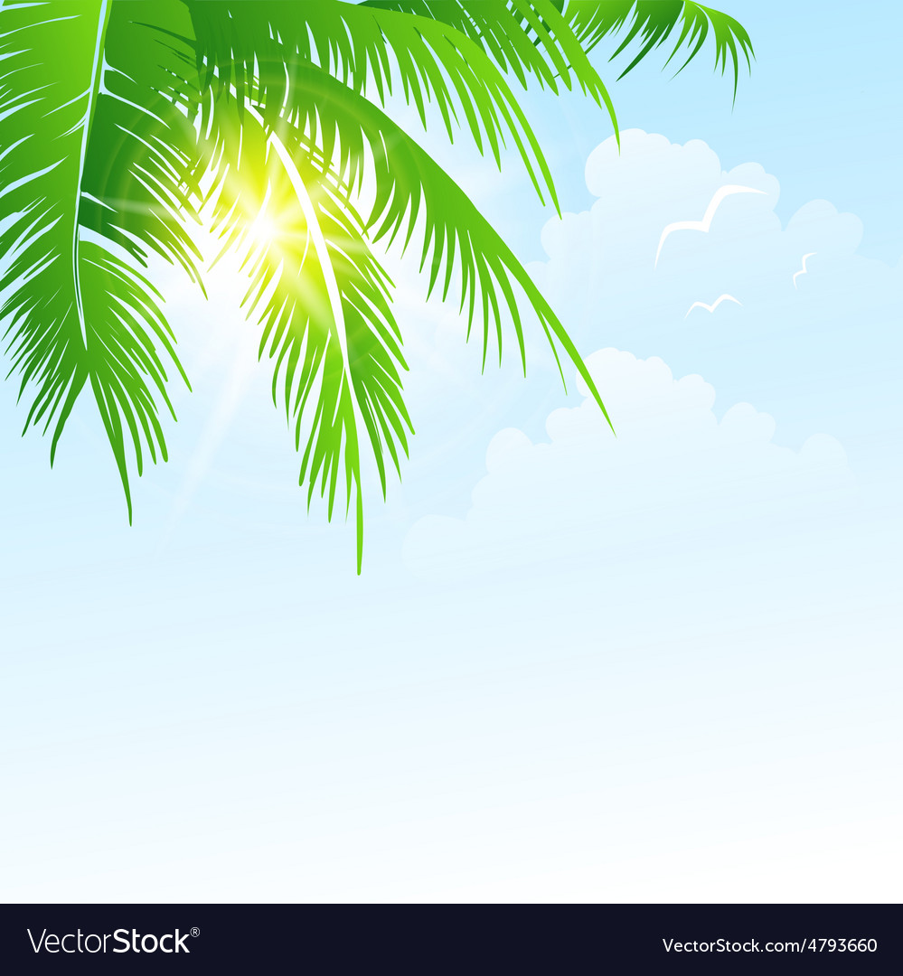 Summer holidays background with palm vector