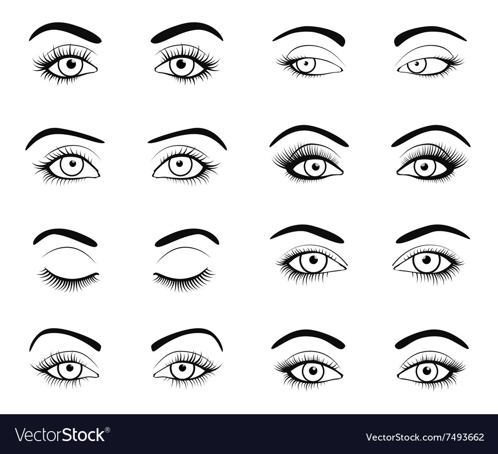 Set of female eyes and brows image with vector
