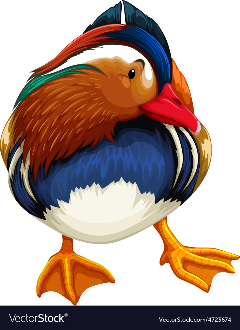 Madarin duck vector