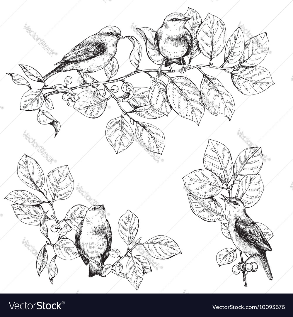 Branch bird vector