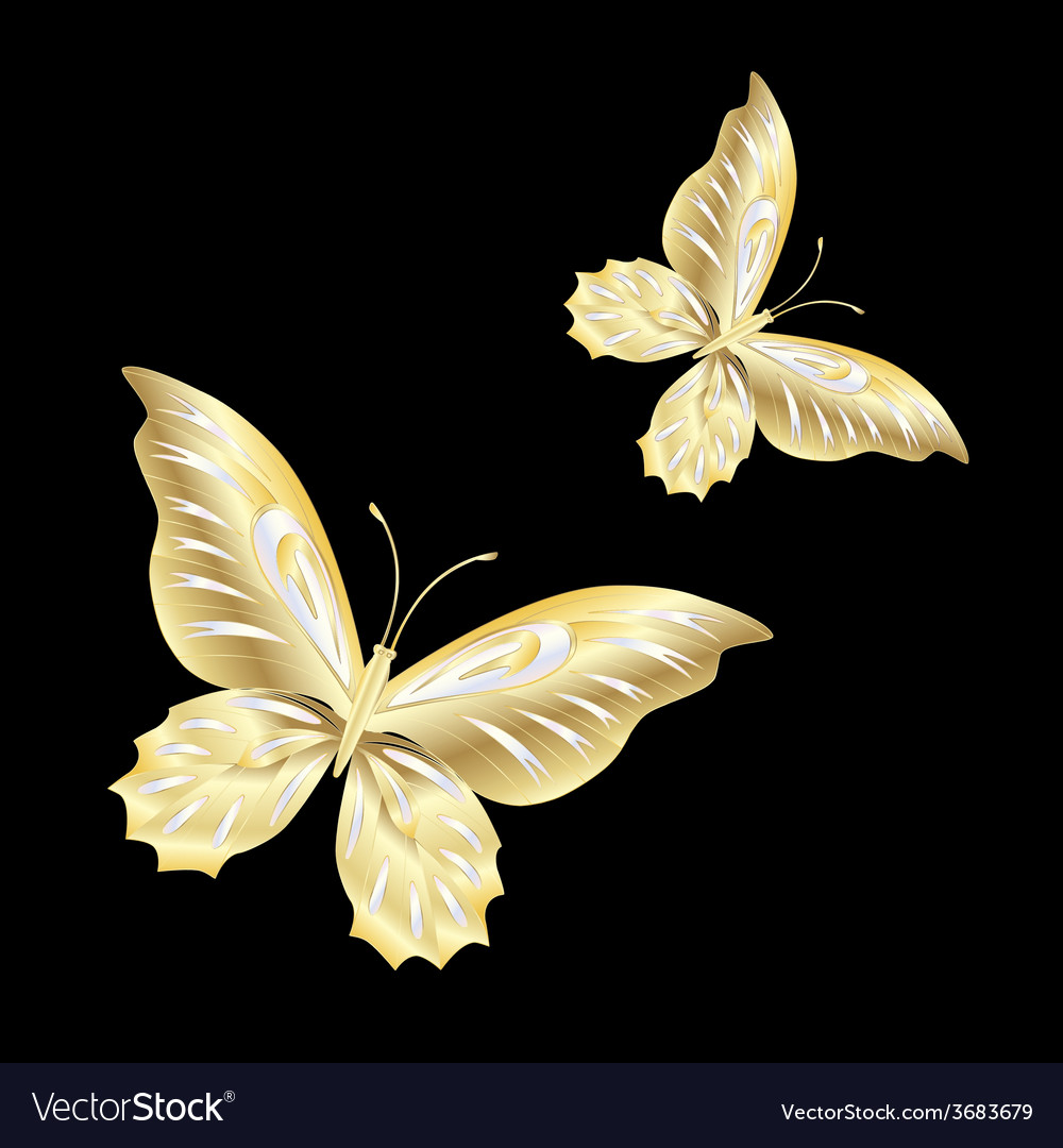Gold lace butterfly on black background vector