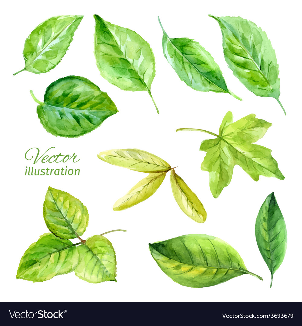 Set of spring leaves watercolor vector