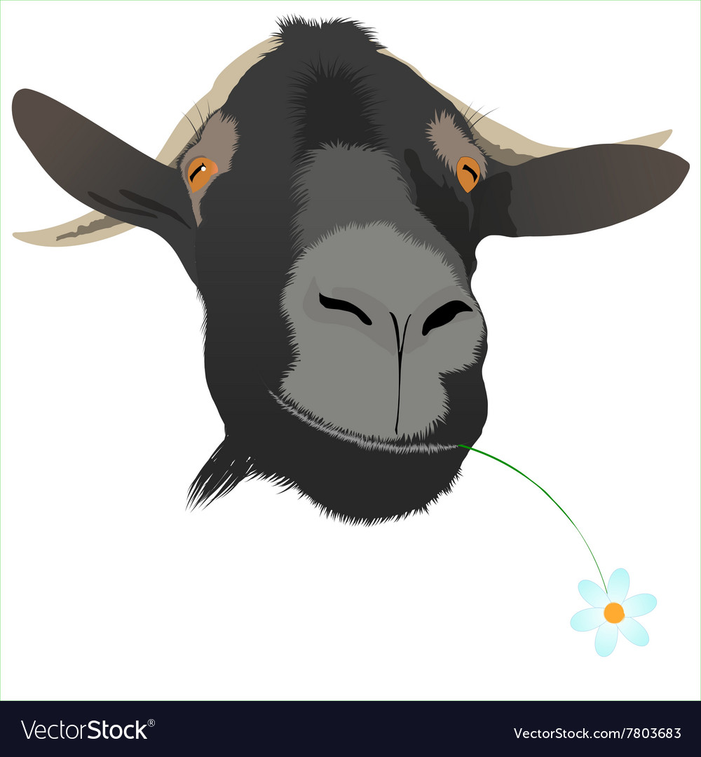 Cool goat with flower vector