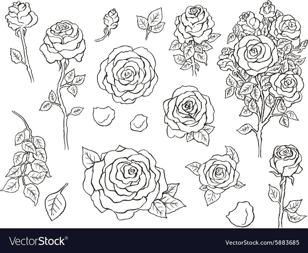 Set of ink hand drawn stylized flowers vector