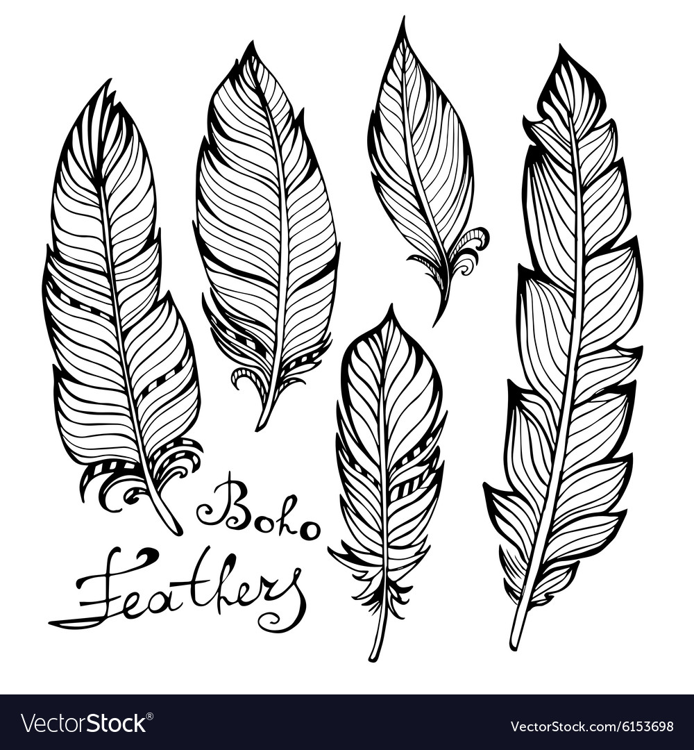 Hand drawn bird black feathers closeup isolated on vector