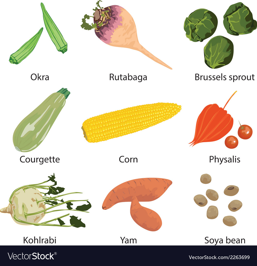 Set of 9 vegetables vector