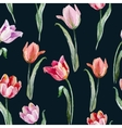 Tulip pattern vector image