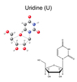 Chemical formula and model of uridine vector image