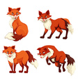 Four foxes with red fur vector image