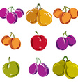 Set of colorful different ripe sweet fruits vector image