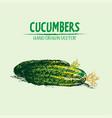 digital detailed line art color cucumber vector image